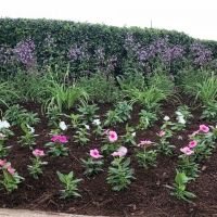 Flower bed and Seasonal Flowers